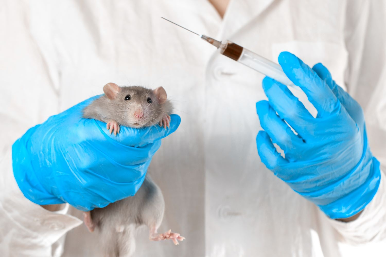Urgent action needed to reduce shocking level of animal use in UK laboratories