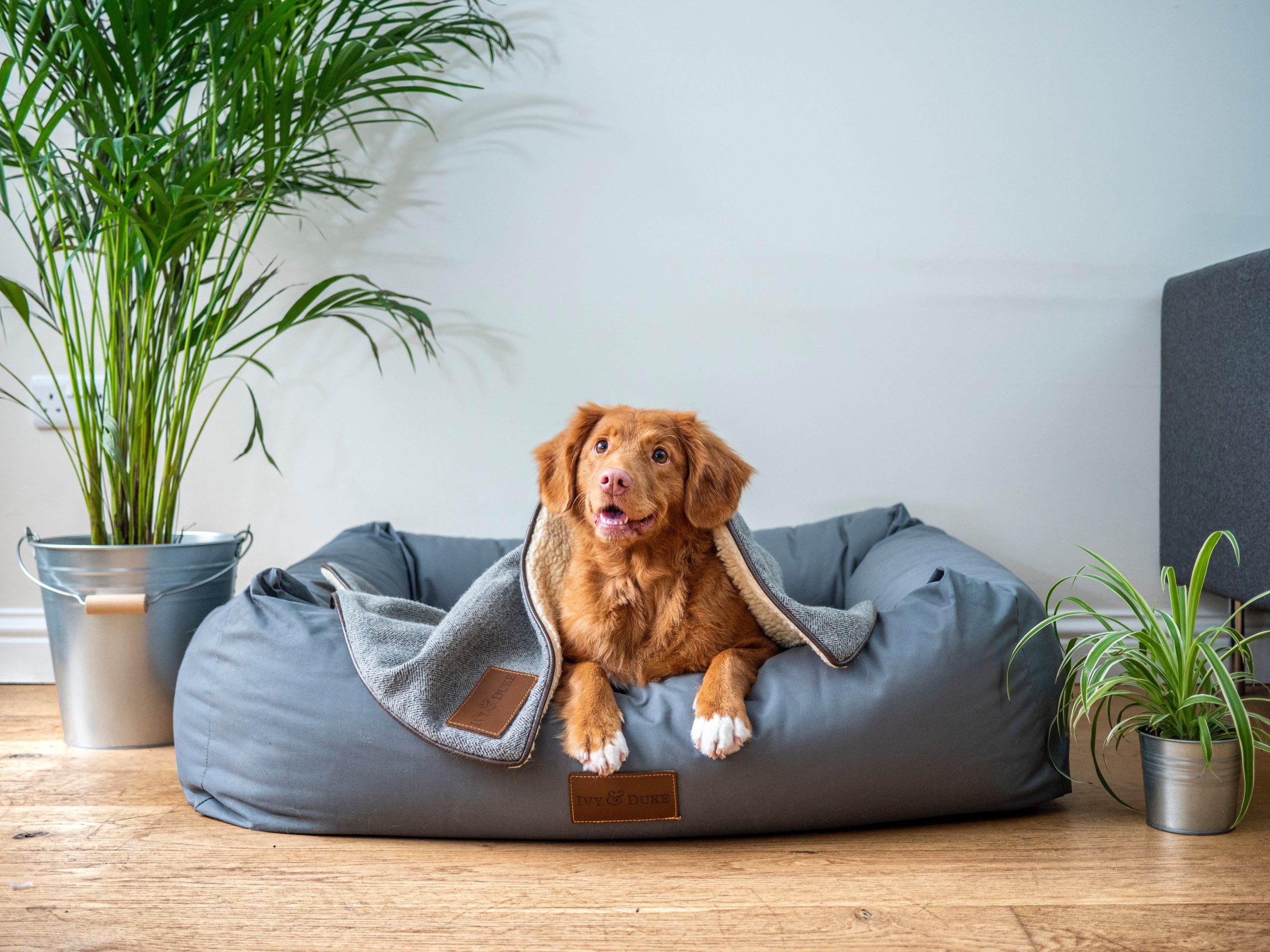 How to Help your Dog Transition to Return to Work