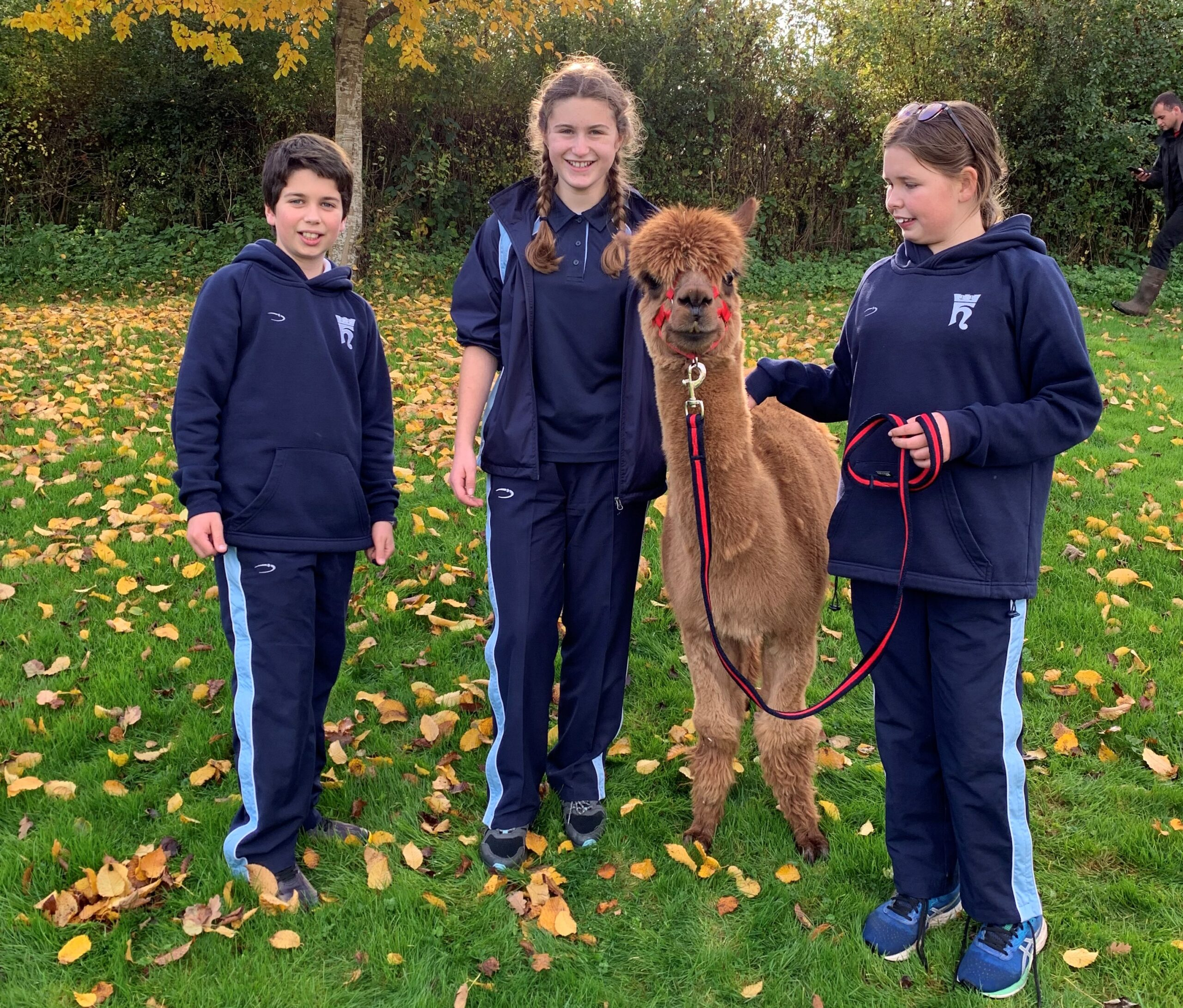 Alpaca surprise boosts student wellbeing ahead of half-term
