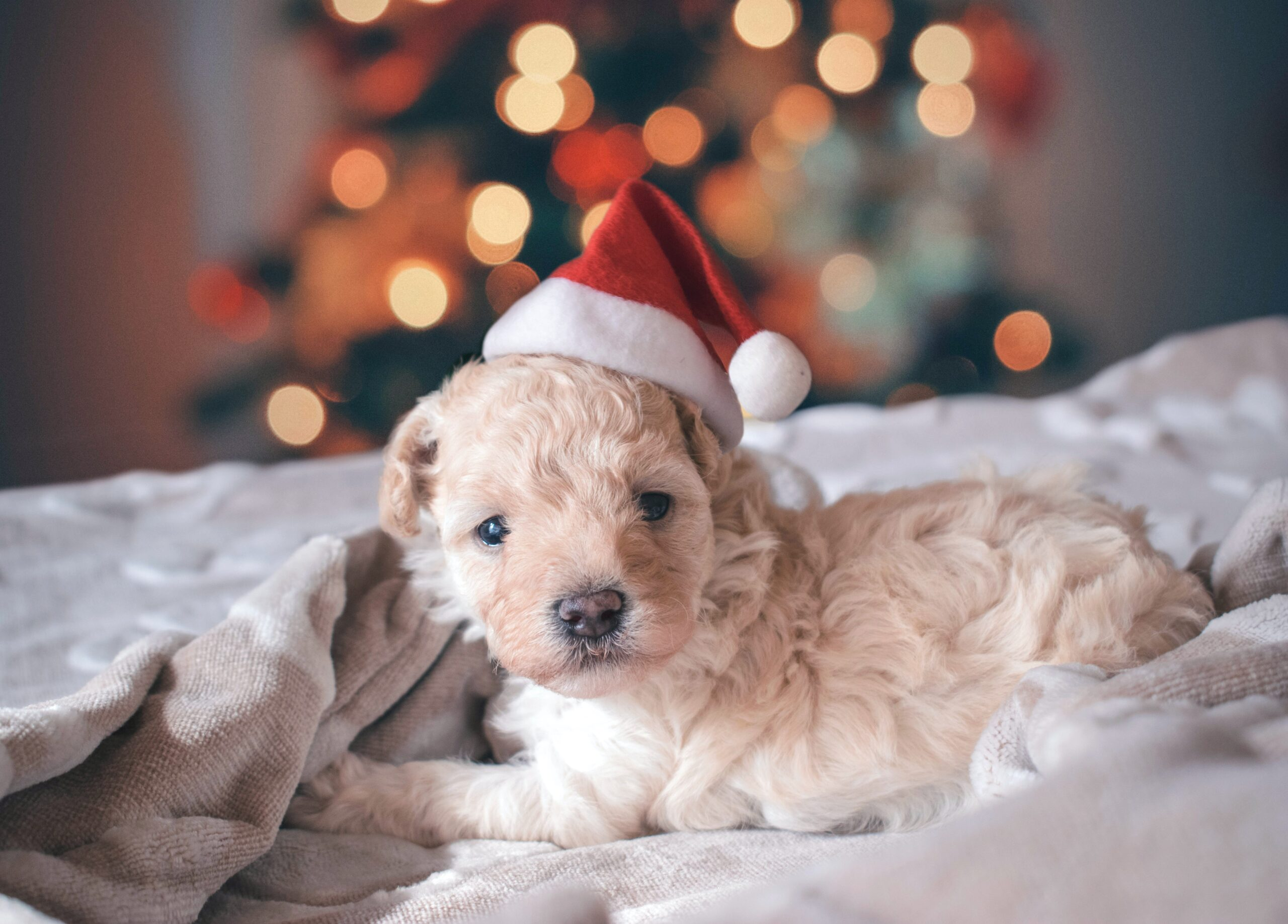 7 Ways to Get Your Pets Involved this Christmas