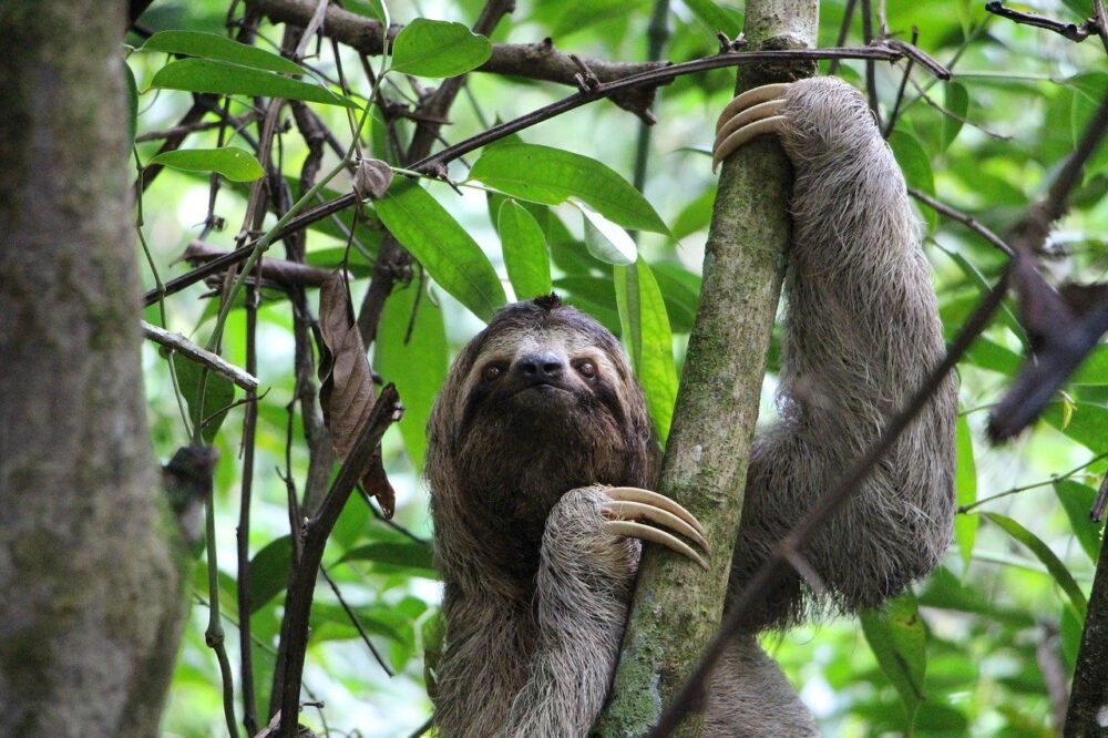 5 ways you can help save rainforests and the world everyday