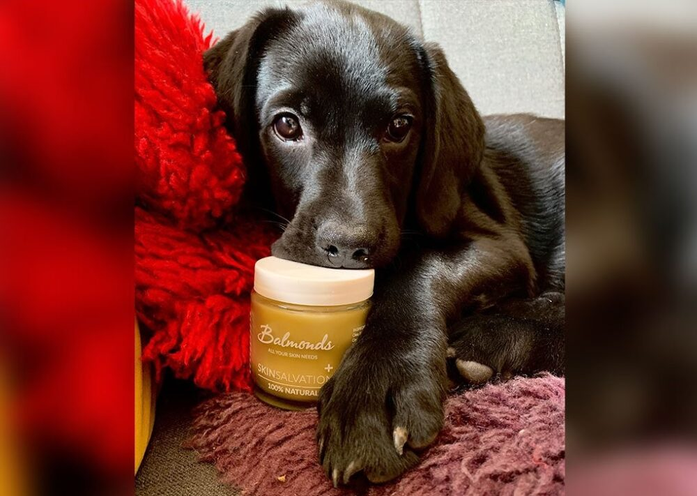 Top Five Ways To Use Balmonds Skin Salvation On Your Dog